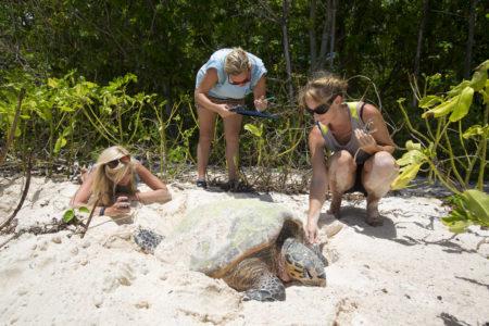 école IGPN institut gestion protection nature etude d'une tortue